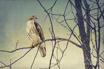 Red-tailed Hawk On Watch Art Print