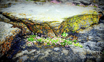 Photograph - Beauty In The Cracks by Lexa Harpell