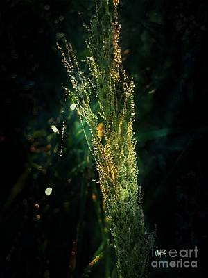 Photograph - Beauty In The Dark by Maria Urso