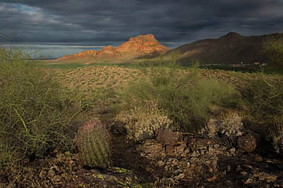 Photograph - Beauty In The Desert by Sue Cullumber