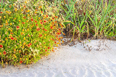 Photograph - Beauty In The Dunes by Elvis Vaughn