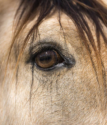 Photograph - Beauty In The Eye by Lisa Moore