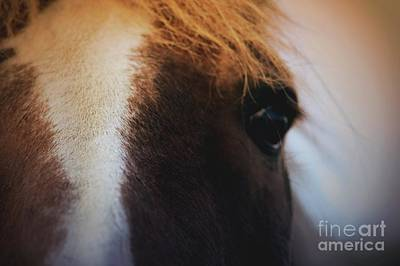 Photograph - Beauty In The Eyes Of The Beholder by Mary-Lee Sanders