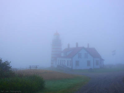 Photograph - Beauty In The Fog by Teri Ridlon