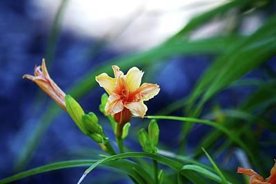 Peach Lilly Photograph - Beauty In The Lillies by Karen Majkrzak