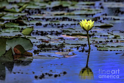 Photograph - Beauty In The Marsh by Gary Holmes