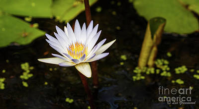 Photograph - Beauty In The Pond by Les Greenwood