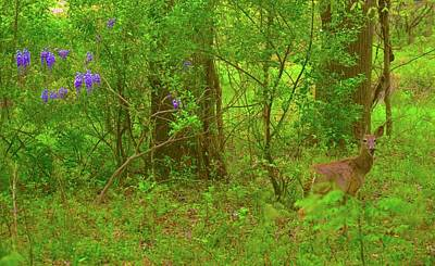 Photograph - Beauty In The Wild by Tracy Rice Frame Of Mind