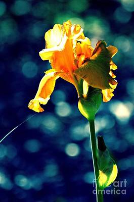 Photograph - Beauty In Yellow by Linda Cox