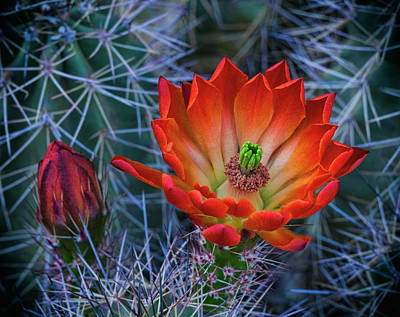 Photograph - Beauty Of A Desert Spring  by Saija Lehtonen