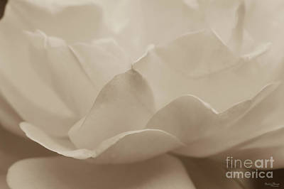 Photograph - Beauty Of A Rose Sepia by Jennifer White