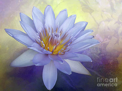Photograph - Beauty Of A Waterlily By Kaye Menner by Kaye Menner