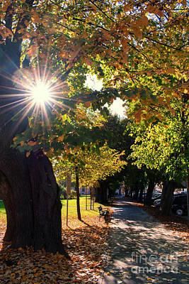 Photograph - Beauty Of Autumn by Nina Ficur Feenan