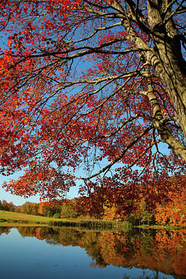 Photograph - Beauty Of Fall by Karol Livote