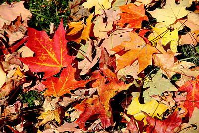 Photograph - Beauty Of Fallen Leaves by Allen Nice-Webb