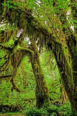 Angeles Forest Photograph - Beauty Of Hoh Rainforest by Dan Sproul