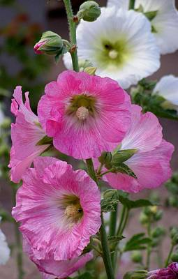 Art Print featuring the photograph Beauty Of Hollyhocks by Jeanette Oberholtzer