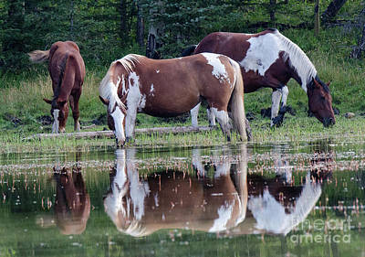 Photograph - Beauty Of Horses 1 by Bob Christopher