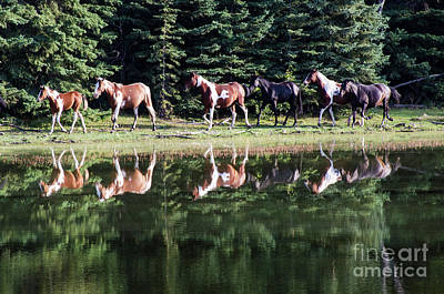 Photograph - Beauty Of Horses 2 by Bob Christopher