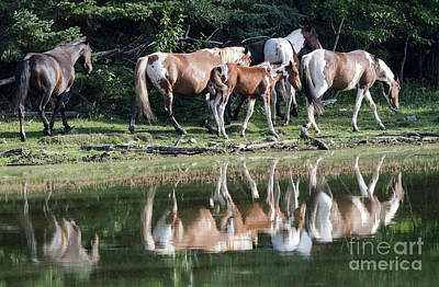 Photograph - Beauty Of Horses 3 by Bob Christopher