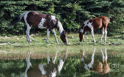 Photograph - Beauty Of Horses 4 by Bob Christopher
