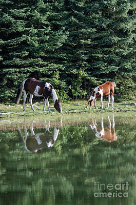 Photograph - Beauty Of Horses 5 by Bob Christopher