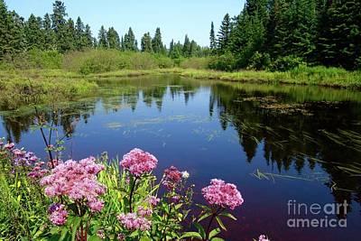 Photograph - Beauty Of Joe Pye Weeds by Sandra Updyke