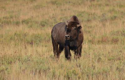 Photograph -  Beauty Of The Beast by Rae Ann  M Garrett