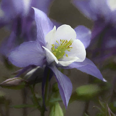 Digital Art - Beauty Of The Columbine by Ernie Echols