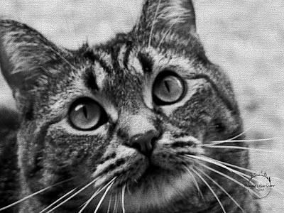 Photograph - Beauty Of The Feline by Absinthe Art By Michelle LeAnn Scott