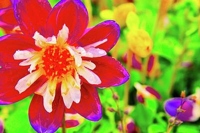 Photograph - Beauty Of The Flower by Joe Burns