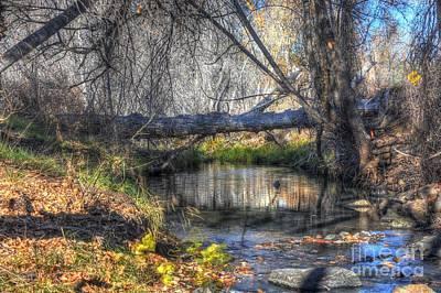 Prescott Photograph - Beauty Of The Season by Thomas Todd