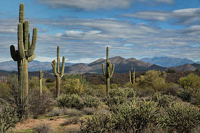 Photograph - Beauty Of The Sonoran  by Saija Lehtonen