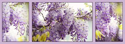 Photograph - Beauty Of Wisteria. Purple. Triptych by Jenny Rainbow