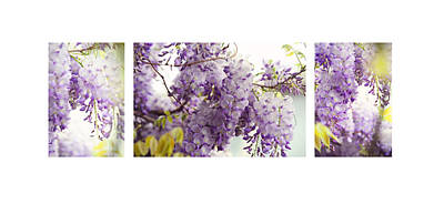 Photograph - Beauty Of Wisteria. White. Triptych by Jenny Rainbow