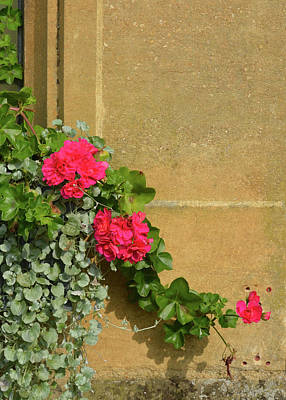 Photograph - Beauty On A Cotswolds Stone Wall by Carla Parris