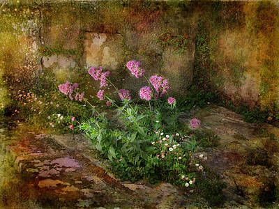 Photograph - Beauty On An Old Stone Wall by Carla Parris