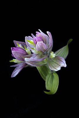 Photograph - Beauty On Black by Morris  McClung