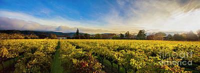 Sonoma Wine Country Photograph - Beauty Over The Vineyard Panoramic by Jon Neidert