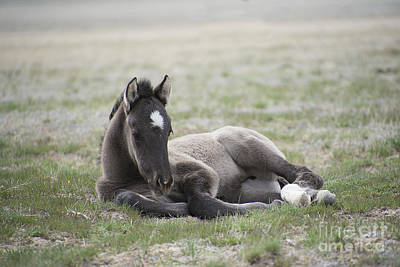 Photograph - Beauty Rest by Nicole Markmann Nelson
