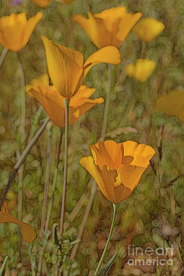 Photograph - Beauty Surrounds Us by Tom Kelly