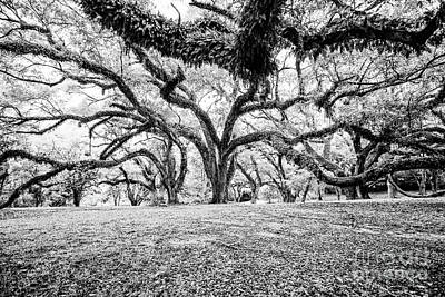 Photograph - Beauty Under The Branches - Bw by Scott Pellegrin
