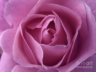 Photograph - Beauty Unfolds  by Kim Tran