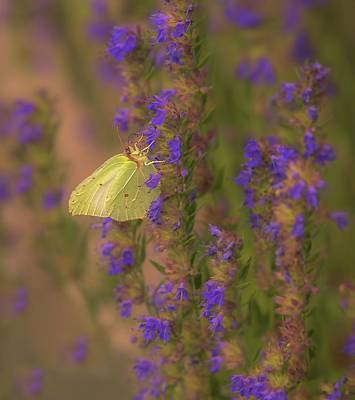 Photograph - Beauty With Wings by Rose-Marie Karlsen