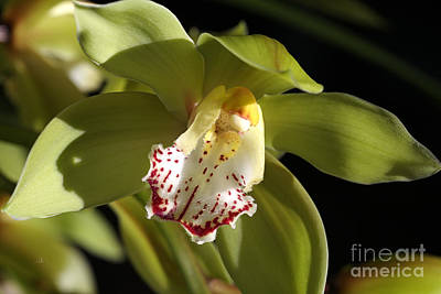 Photograph - Beauty Within A Green Orchid by Joy Watson