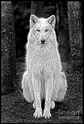 Photograph - Beauty Wolf by Sonya Lang