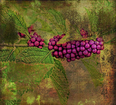 Photograph - Beautyberry by HH Photography of Florida