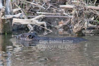 Photograph - Beaver 0530 by Captain Debbie Ritter