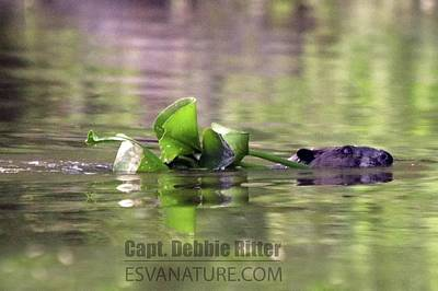 Photograph - Beaver 5398 by Captain Debbie Ritter