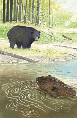 Beaver Art Print by Denny Bond